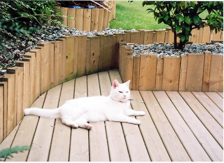 Garden Decking Photos / Gallery: Wooden Landscapes Images: Cat on Deck